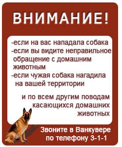 Человек и собака в большом городе